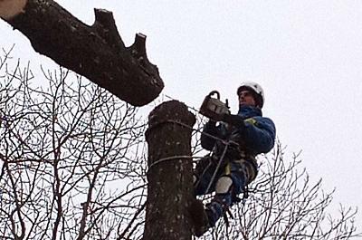 Wycinka, wycinanie drzew metodą alpinistyczną Warszawa