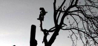 Wycinka drzew metodą alpinistyczną, pielęgnacja drzew Warszawa
